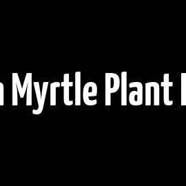 Lemon Myrtle Plant Profile
