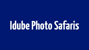 Photographic Safari Must Knows